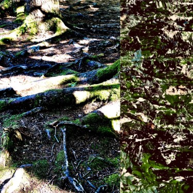 Art inspired by Nature - Roots with Photo
